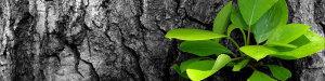 foglie_verdi_projects